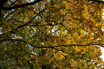 141017 3 Finally getting to witness autumn colours.jpg