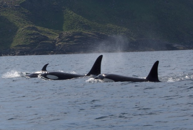 Orcas nearly fell out of the rib with excitement